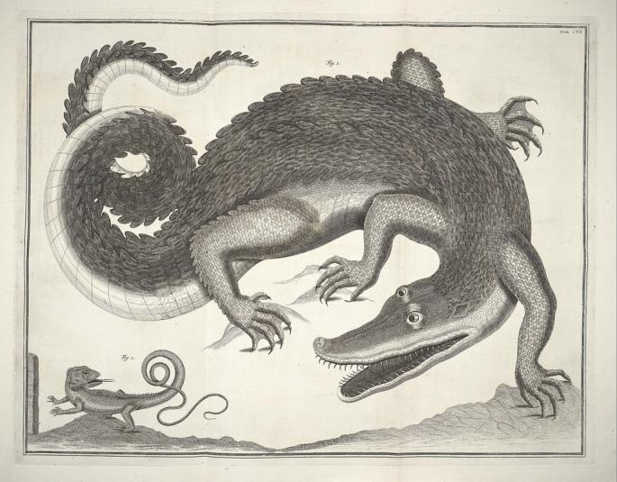 Albertus_Seba_Thesaurus_Tab._CVI