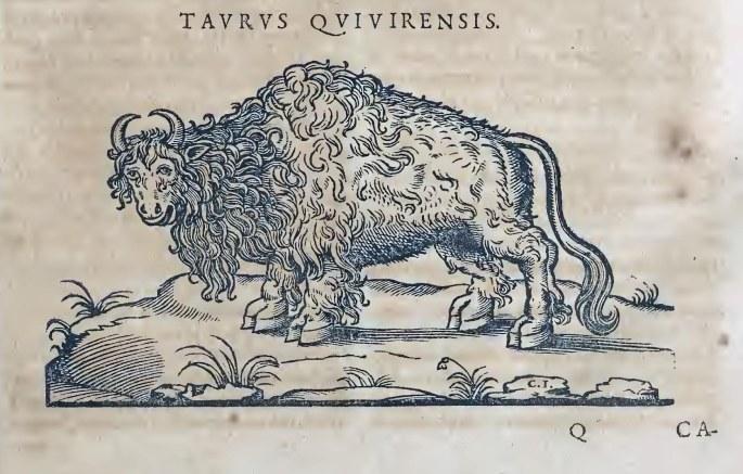 Ioannis Evsebii Nierembergii ... Historia natvrae, maxime peregr