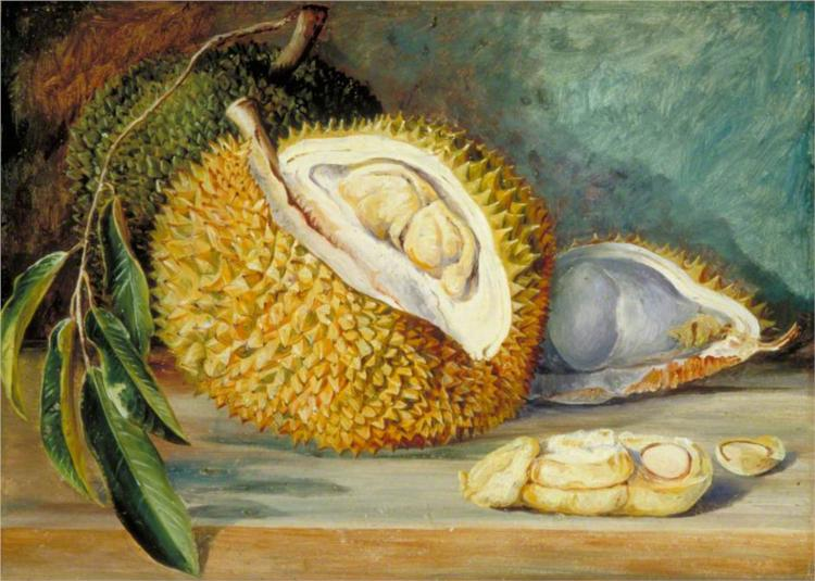 durian-fruit-from-a-large-tree-sarawak-borneo-1876.jpg!Large