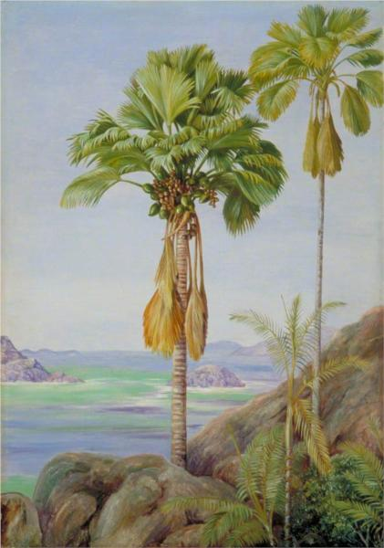 male-and-female-trees-of-the-coco-de-mer-in-praslin-1883.jpg!Large