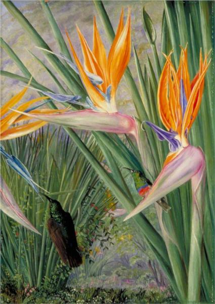 strelitzia-and-sugar-birds-south-africa-1882.jpg!Large