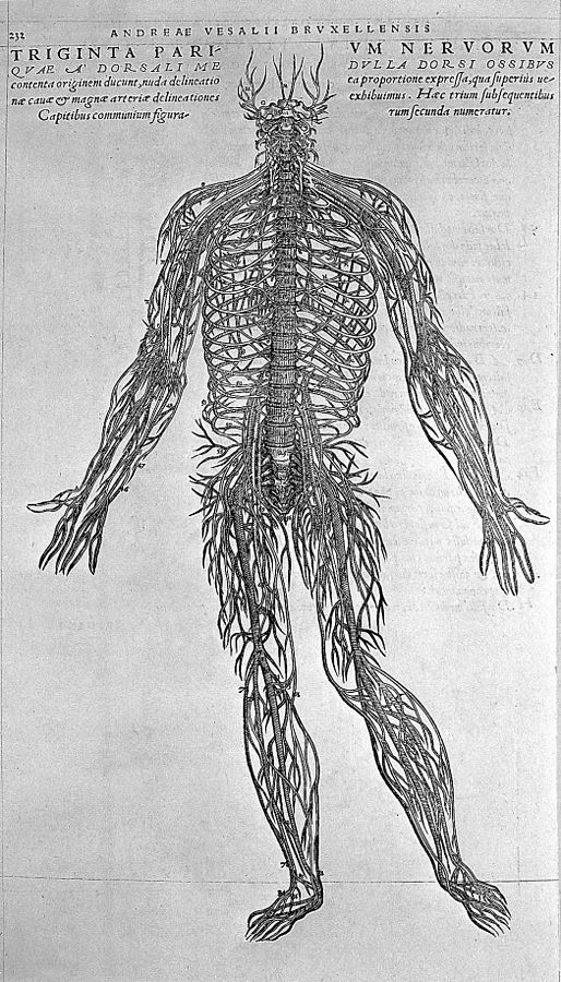 514px-2nd_nerve-figure,_by_Vesalius._Wellcome_L0003674