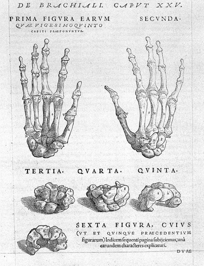 691px-A._Vesalius,_bones_of_hand,_with_text_above_Wellcome_L0029563